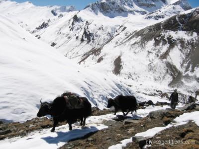 Trekking mit Jaks in Bhutan